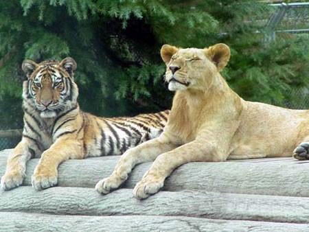 信步野生动物园