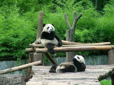 此时,亲子同游自然保护区或者动物园,孩子们可以和动物伙伴近距离接
