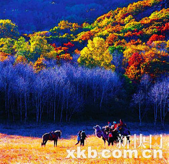 """【点睛】进入11月,意味着进入了秋天。在文人的诗词歌赋中,这是一个伤感的季节;但在摄影发烧友眼里,它显然是个收获的季节。秋天的景色,比其他季节来得绚丽而多彩,最容易让人捕捉到大自然的气息。就算是相同纬度的地方,也展现出不一样的景致。当白雪慢慢""""侵占""""长白山红叶的地盘时,新疆的喀纳斯已停止了变化,从深秋步入到初冬,但贾登峪和禾木依然美丽,四川的米亚罗和九寨沟则进入秋天最后的辉煌,而在韩国的全罗南道和日本的京都,红叶的美景才刚刚开始。   探寻这样的风景就好似寻访一位深居简出、绝不"""